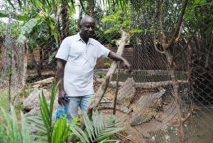 Albert Ngendera near Crocodiles he raises in his household.©Iwacu
