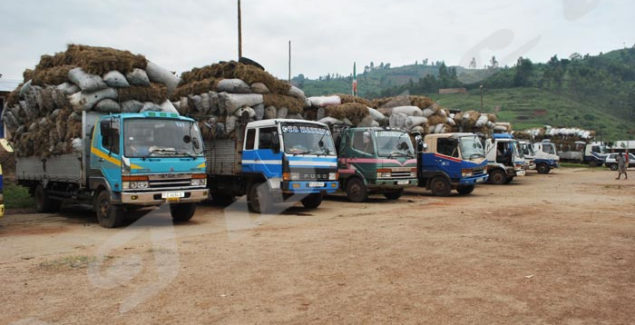 Trucks overloaded with charcoal