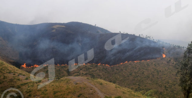 Bush fires destroying a forest in Gisuru Commune, Ruyigi province