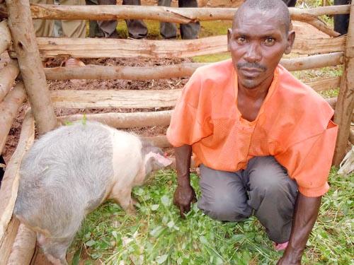 Cyrille Bivugire dans la porcherie à côté de sa truie ©Iwacu
