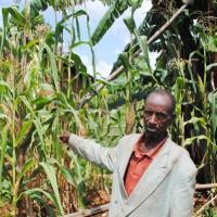 Joas Maregeya : « Ils nous donnent des trucs à mettre dans nos champs mais personne ne nous explique comment ça marche » ©Iwacu