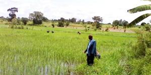 Déo Ndayegamiye montrant avec fierté son champ de riz dans le marais de KinwaBientôt les marchandises seront inspectées par les scanner de la CotecnaCharles Nihangaza : « Il faut donc réviser cette taxe et préciser les produits taxables bénéficiaires » ©Iwacu