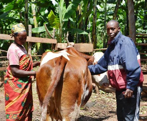 Désiré Ndikumana, vétérinaire communal en compagnie de Mme Candide Manirambona ©Iwacu