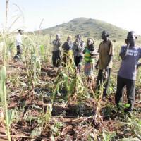 Les agriculteurs, tristes, dans un des champs détruit par les vaches de leurs voisins, éleveurs  ©Iwacu