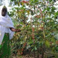 Chantal Nizigiyimana passe quelques fois des nuits blanches pour suivre les activités de son usine ©Iwacu