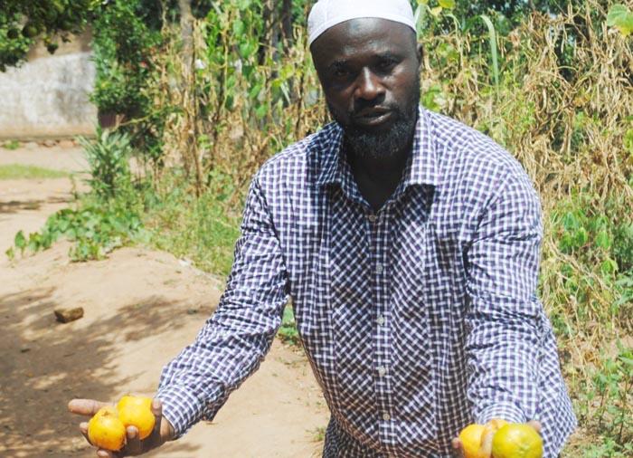 "Salum Kabura montrant des mandarines déjà pourries:"" ©Iwacu"