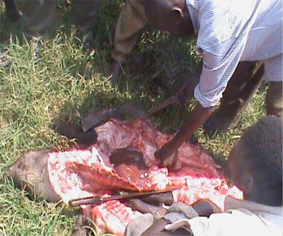 Des bouchers surpris par le service de la santé animale dans la brousse en province de Bujumbura rural ©Iwacu