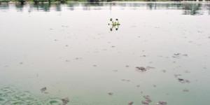 Les eaux du Lac Tanganyika de plus en plus polluées ©Iwacu