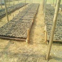 Vue partielle de la pépinière à Gatunguru