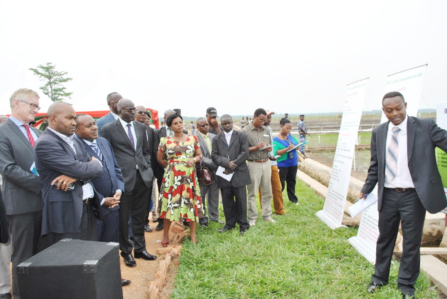 Visites des officiels dans les champs d'expérimentation de l'IRRI à Gihanga ©Iwacu