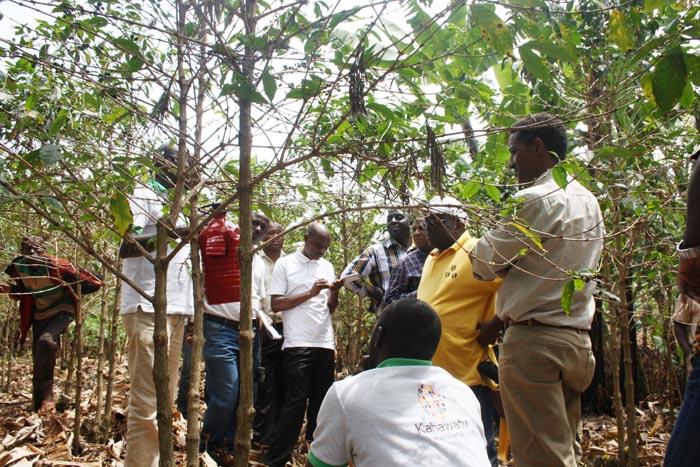 La délégation (Kahawatu et ses partenaires) dans un champ de démonstration des bonnes pratiques (piège à scolyte).