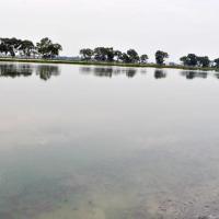 La jacinthe d'eau n'est plus dans les lagunes de Buterere ©Iwacu