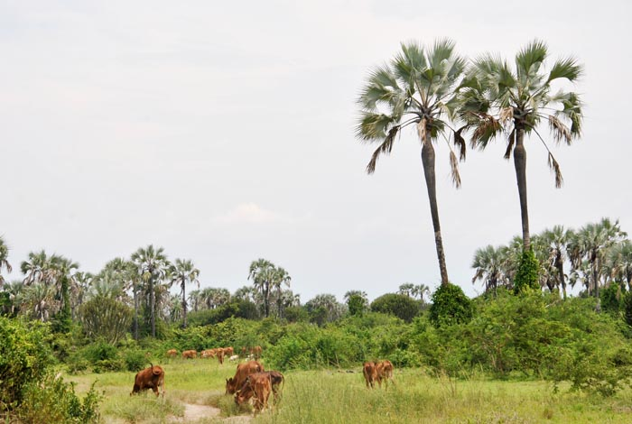 Réserve de la Rukoko où des cultivateurs ont été empêchés de pénétrer  ©Iwacu