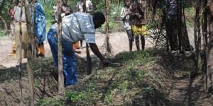 Le directeur provincial de l'agriculture et de l'élevage procède à l'arrachage de la culture de stévia à Kizuka en commune de Rumonge ©Iwacu