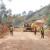 A moins de 91km du chef-lieu de la commune Rugombo, du côté de la commune Bukinanyana, la route a été endommagée à cause d'un éboulement ©Iwacu