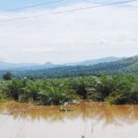 Des innondations suite à la rivière Murembwe qui a quitté son lit, des étendues de cultures endommagées ©Iwacu