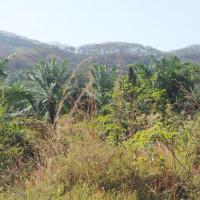 Vue de la réserve nturelle de Rumonge qui fait objet de litige entre rapatriés et l'INECN