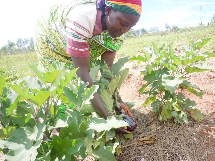 Margueritte Bamboneyeho : « Quand je vends des carottes ou des aubergines, je parviens à économiser 2 000 Fbu ou 3 000Fbu ! » ©Iwacu
