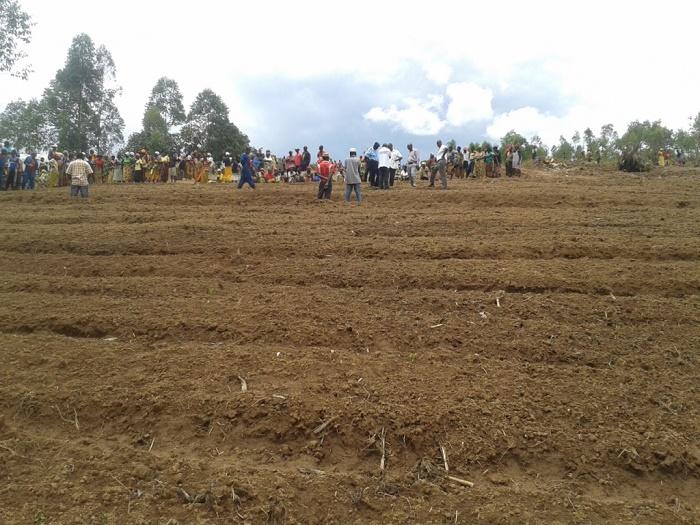 La population assiste, impuissante, à l'interdiction de la culture de stévia par les autorités provinciales ©Iwacu