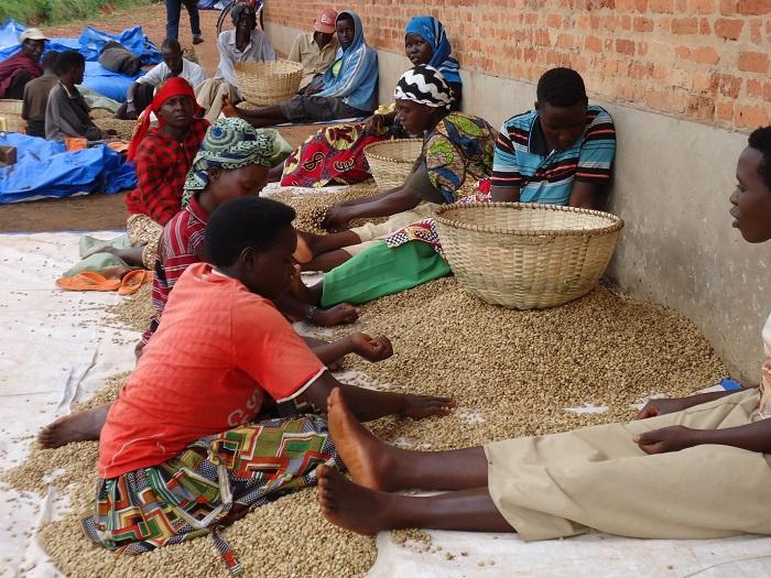 Vue partielle des personnes embauchées pour les activités manuelle à la station de dépulpage- lavage de Mubuga