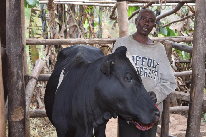 Julien Ntahombaye : « Tous mes enfants vont à l'école grâce à la vente du lait. »