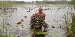 Quand le malheur du Tanganyika fait le bonheur des fleuristes