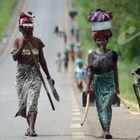 l'agriculture artisanale, lot de l'habitant de Buganda