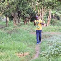 Jadot Nkurunziza cueillant des manges au milieu des arbres qu'il a planté au groupement de maintenance automobile et d'équipement militaire (GMAEM).