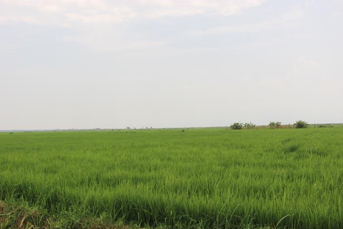 Gihanga, la commune verte