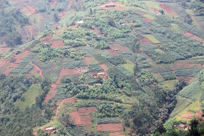 Flancs couverts de champs des collines de Mutambu