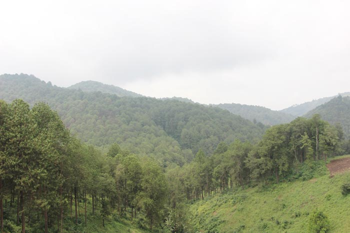 Rugazi, un paradis forestier