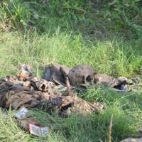 Des restes de trois corps remontés d'une toilette