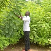Jadot Nkurunziza:«Il faut que l'administration relaye le message des associations militant pour la protection de l'environnement»
