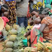 Le commerce d'ananas, une roue de secours pour les foyers de Murwi