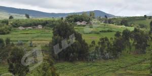 Peur sur Mugamba