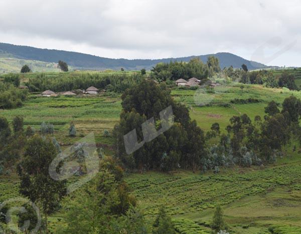 Localité de Nyagasasa où plusieurs jeunes auraient été arrêtés après l'assassinat des membres du Cndd-fdd