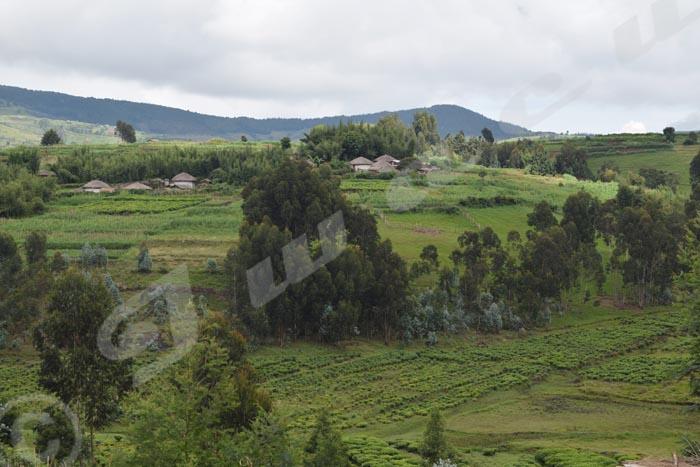 Un homme a été blessé par des hommes armés sur la colline Mukara