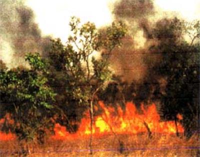 Une partie de la Kibira en feu