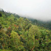 Les gens s'installent et cultivent dans les réserves naturelles.