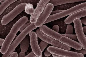 e-coli-hd