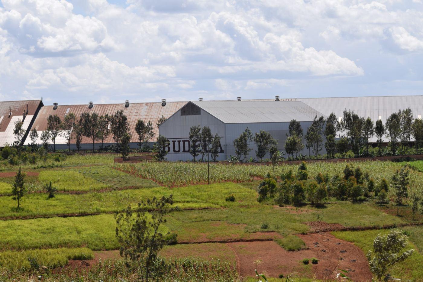 Privatisation de l'Ex-Sodeco Songa : des espoirs douchés