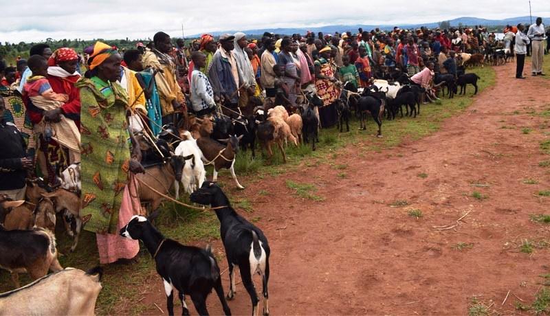 Plus de 8.000 petits ruminants morts de la peste depuis décembre