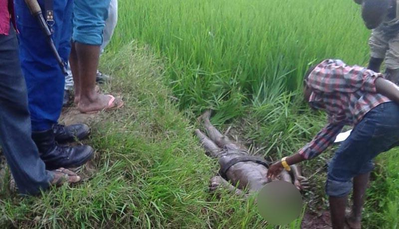 Kinama : un corps décapité retrouvé dans une rizière avec un message