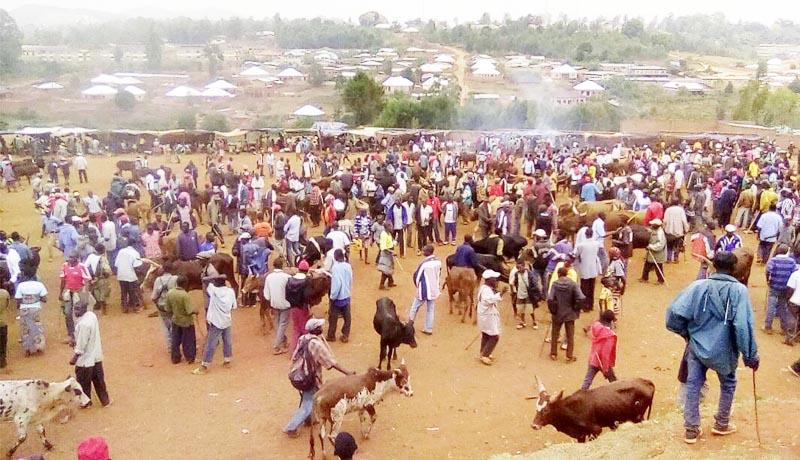 Gitega : les vaches se raréfient