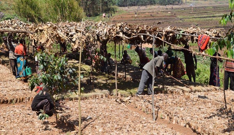 Projets financés par le FIDA, un tremplin pour le développement durable au Burundi