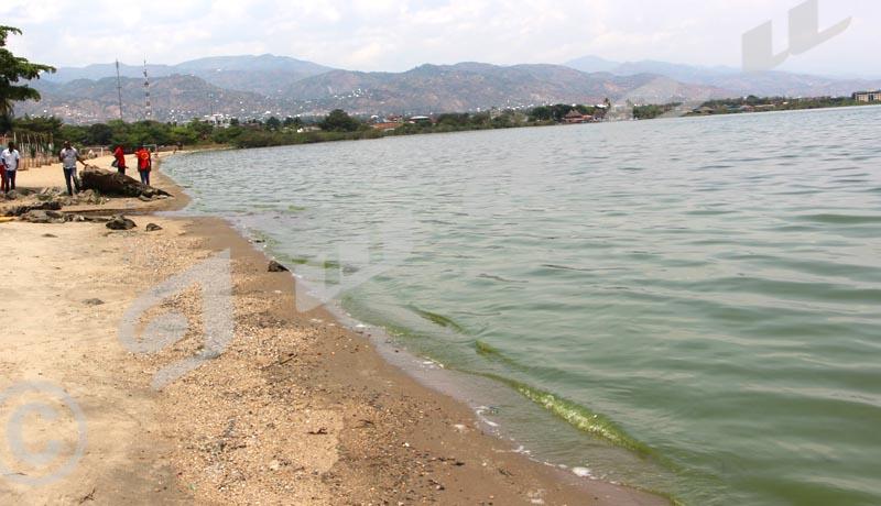 Inquiétante couche verte sur une partie des eaux du lac Tanganyika