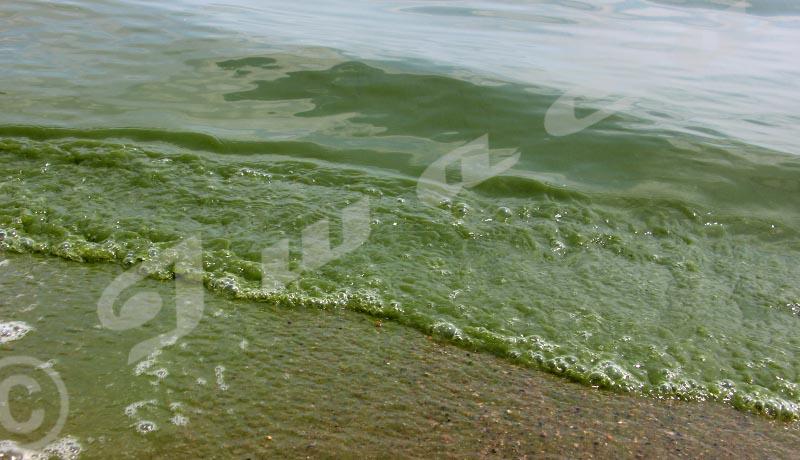 Les eaux du lac Tanganyika devenues vertes. Un phénomène, observé tout près du port vers 8h, est naturel et sans danger selon un spécialiste ©Onesphore Nibigira /Iwacu