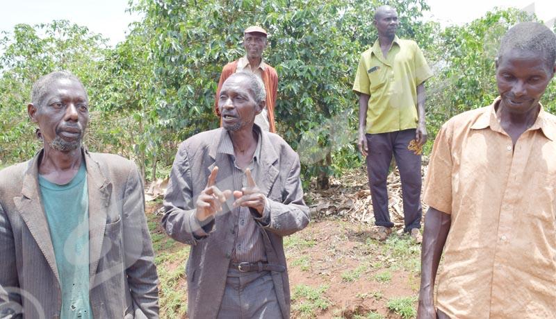 Ngozi : Les larmes des caféiculteurs