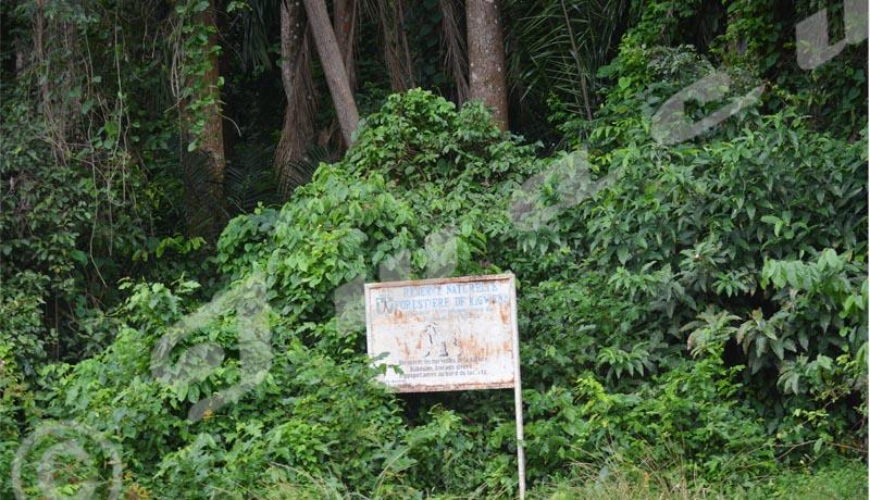 Environnement : Les aires protégées du sud se meurent