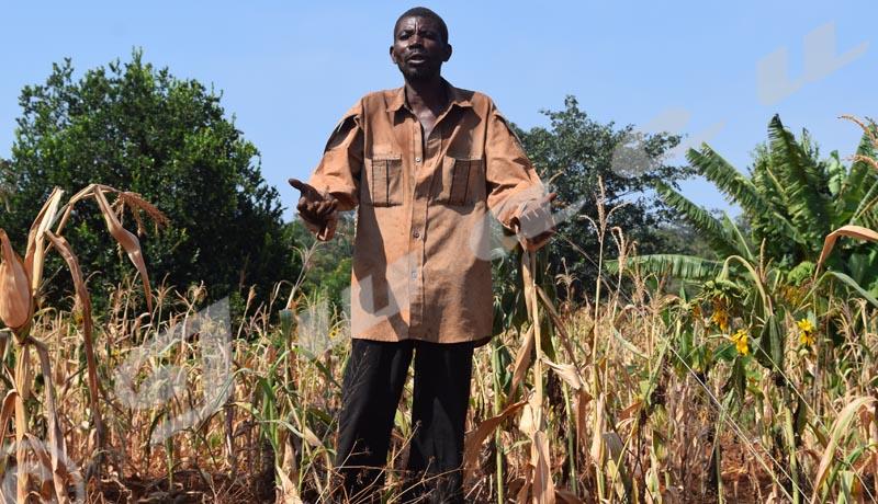 Kirundo : La famine frappe la commune Busoni